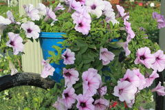 Purpere bloem in Mirakeltuin Doubai stock fotografie