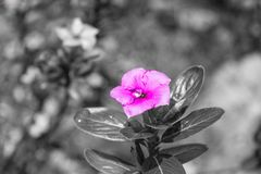 Purpere bloem na regen stock fotografie