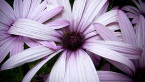 Purpere bloem in ondiepe diepte van gebied Stock Afbeeldingen