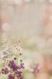 Purpere bloem op oude document achtergrond Stock Afbeeldingen