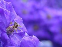 Purpere bloem in openluchttuin Stock Afbeeldingen