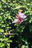 Purpere bloem in park Stock Foto