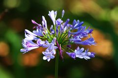 Purpere bloem tegen groen gebladerte Stock Foto