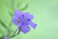 Purpere bloem in tuin Stock Afbeelding