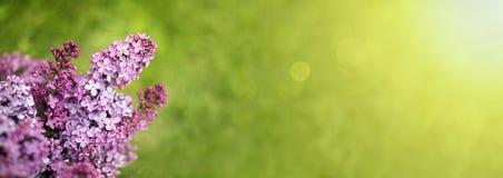 Purpere bloembanner Royalty-vrije Stock Fotografie