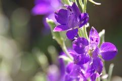 Purpere bloemen stock foto