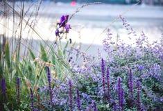 Purpere bloemen Stock Afbeelding