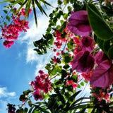 Purpere bloemen Royalty-vrije Stock Foto's