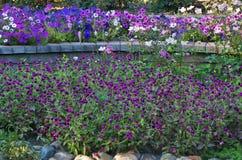 Purpere bloemen! Stock Afbeelding