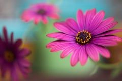 3 purpere bloemen Royalty-vrije Stock Foto