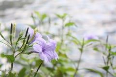 Purpere bloemen in de dag met een rivierachtergrond en vaag royalty-vrije stock foto