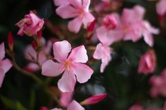 Purpere Bloemen in de Tuin royalty-vrije stock afbeeldingen