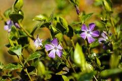 Purpere bloemen in de weide royalty-vrije stock foto