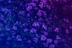 purpere bloemen in de de zomertuin, natuurlijke achtergrond stock foto's