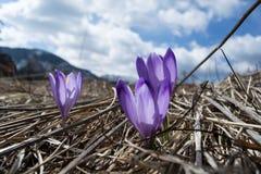 Purpere Bloemen in de zon stock foto