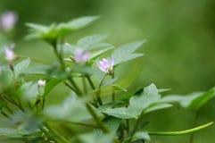 purpere Bloemen die bloeiend zijn stock foto's