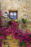 Purpere bloemen door een venster Royalty-vrije Stock Fotografie