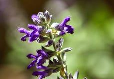 Purpere bloemen in een park, macro stock fotografie