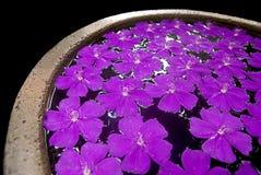 Purpere bloemen in een pot Stock Afbeeldingen