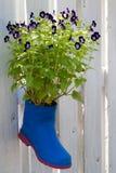 Purpere bloemen in een vaaslaarzen op een muurhout stock afbeelding