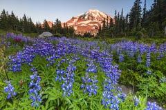 Purpere bloemen en bergen Royalty-vrije Stock Afbeeldingen