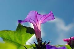 Purpere bloemen en blauwe hemel stock afbeelding