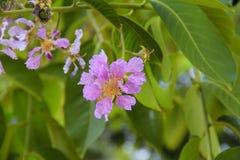 Purpere bloemen en groene bladeren royalty-vrije stock afbeelding