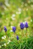 Purpere bloemen in gras stock afbeeldingen