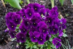 Purpere Bloemen in het regenwoud royalty-vrije stock foto