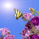 Purpere bloemen met een vlinder Royalty-vrije Stock Afbeelding