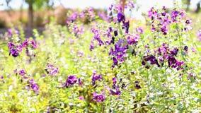Purpere bloemen met groene bladeren stock video