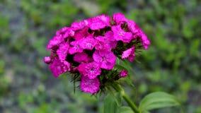 Purpere bloemen met kleine naalden op groene achtergrond stock foto's