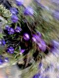 Purpere bloemen met natuurlijke vervorming Stock Foto