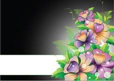 Purpere bloemen met strook op zwarte achtergrond Royalty-vrije Stock Afbeeldingen