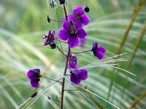 Purpere bloemen met vlieg Stock Afbeeldingen