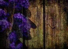 Purpere bloemen op de omheining Stock Afbeeldingen