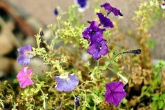 Purpere bloemen op een interessante achtergrond Royalty-vrije Stock Foto