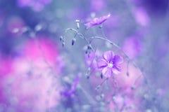 Purpere bloemen op linnen gekleurde achtergrond Kunstbeeld van wilde bloemen Selectieve zachte nadruk royalty-vrije stock foto