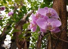 Purpere bloemen van orchideefamilie stock afbeelding
