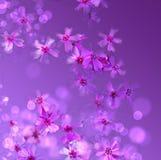 Purpere bloemenachtergrond Royalty-vrije Stock Afbeeldingen