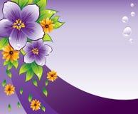 Purpere bloemenachtergrond met dew-drop Stock Foto