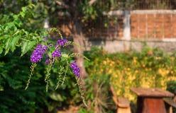 Purpere bloemenachtergrond in tuin, purpere hangende bloemen Royalty-vrije Stock Foto