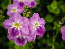 Purpere bloemeninstallaties Royalty-vrije Stock Afbeeldingen
