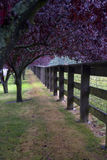 Purpere Bomen langs een Omheining Stock Foto's
