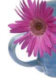 Purpere Daisy in de Mok van de Koffie stock afbeeldingen
