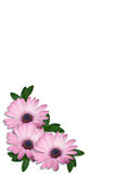 Purpere Daisy Flowers Corner Design Stock Fotografie