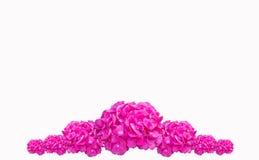 Purpere de Hydrangea hortensiamacrophylla van de Hydrangea hortensiabloem, Roze die Bloem op witte achtergrond wordt geïsoleerd Stock Afbeeldingen
