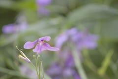 Purpere de installatiebloemen van de bloemen romantische iris stock foto's