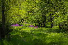 Purpere die bloem diep in het platteland wordt verborgen Stock Fotografie