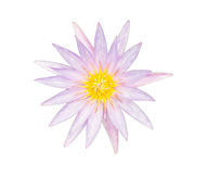 Purpere die lotusbloem op witte achtergrond wordt geïsoleerd stock foto's